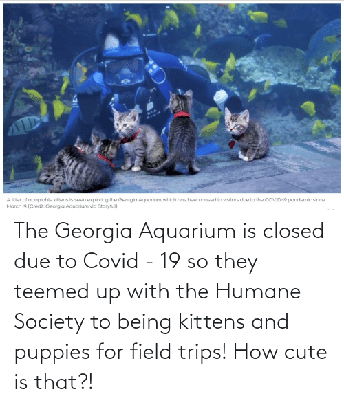 Georgia: The Georgia Aquarium is closed due to Covid - 19 so they teemed up with the Humane Society to being kittens and puppies for field trips! How cute is that?!