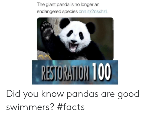 pandas: The giant panda is no longer an  endangered species cnn.it/2csxhzL  RESTORATION 100 Did you know pandas are good swimmers? #facts