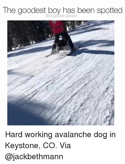 avalanche: The goodest boy has been spotted  @dogsbeingbasic Hard working avalanche dog in Keystone, CO. Via @jackbethmann