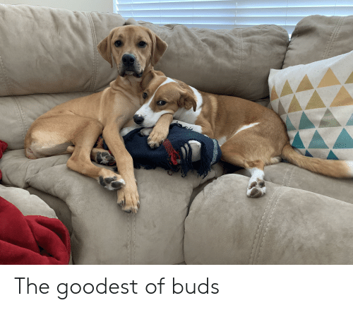 Buds and The: The goodest of buds