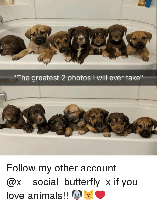 """Animals, Love, and Memes: """"The greatest 2 photos I will ever take"""" Follow my other account @x__social_butterfly_x if you love animals!! 🐶🐱❤"""