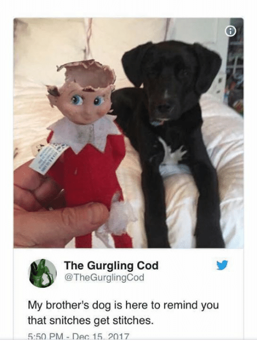 Memes, Stitches, and 🤖: The Gurgling Cod  @TheGurglingCod  My brother's dog is here to remind you  that snitches get stitches.  5:50 PM-Dec 15. 2017