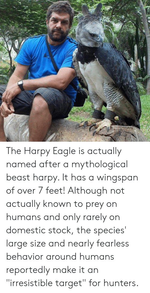 """Memes, Target, and Eagle: The Harpy Eagle is actually named after a mythological beast harpy. It has a wingspan of over 7 feet! Although not actually known to prey on humans and only rarely on domestic stock, the species' large size and nearly fearless behavior around humans reportedly make it an """"irresistible target"""" for hunters."""