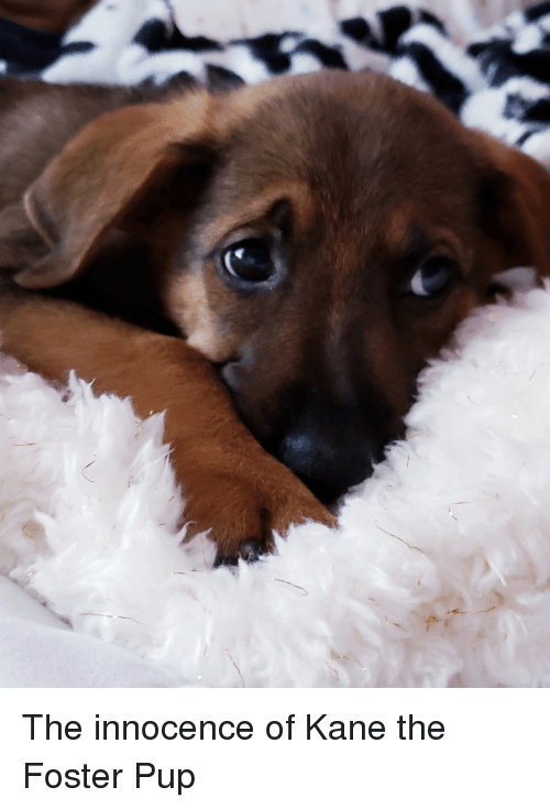 Bad, Sad, and Pup: The innocence of Kane the Foster Pup