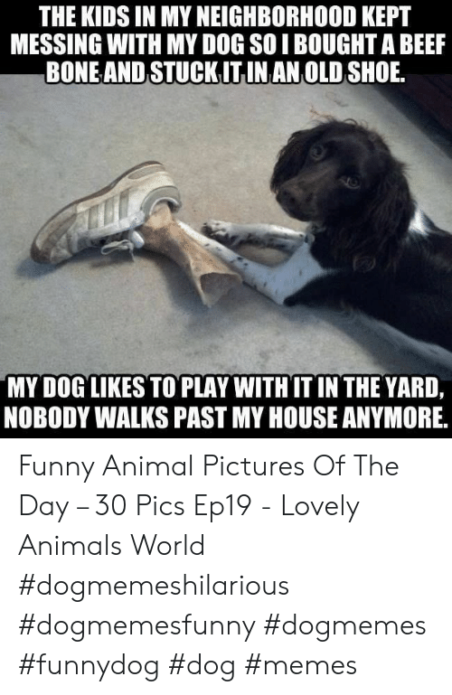 funny animal: THE KIDS IN MY NEIGHBORHOOD KEPT  MESSING WITH MY DOG SOI BOUGHT A BEEF  BONEAND STUCKITINAN OLD SHOE  MY DOG LIKES TO PLAY WITHIT IN THE YARD,  NOBODY WALKS PAST MY HOUSE ANYMORE, Funny Animal Pictures Of The Day – 30 Pics Ep19 - Lovely Animals World #dogmemeshilarious #dogmemesfunny #dogmemes #funnydog #dog #memes