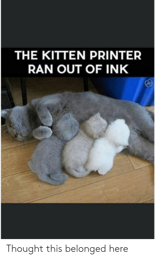 Thought, Printer, and Kitten: THE KITTEN PRINTER  RAN OUT OF INK Thought this belonged here