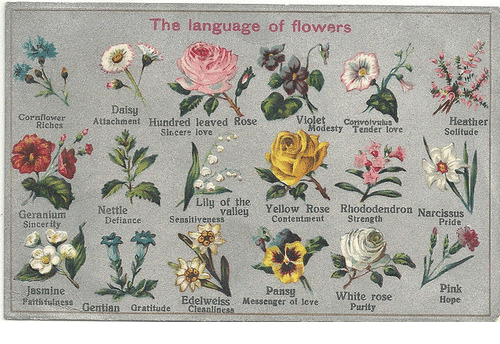 Attachment: The language of flowers  Attachment Hundred leaved aose  Daisy  wH  Heather  Solitude  Violet Convolyalus  Cornflower  odesty Tender lore  Sincere love  i Yellow Rose Riododendron Narcssdis  Nettle  Pride  Geranium  Sincerity  ContentmentStrength  DefianceSeasitiyeness  Pansy  Messenger of tove  Pink  Hope  Jasmine  atsthilness Gentian Gratitude Clesnliness  Edelweiss  Purily