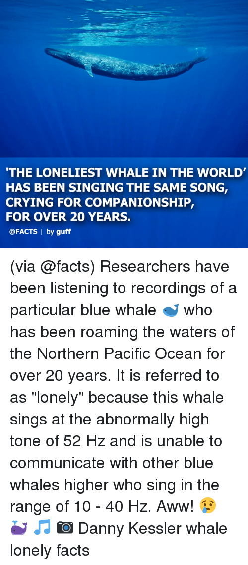 """Companionship: THE LONELIEST WHALE IN THE WORLD  HAS BEEN SINGING THE SAME SONG,  CRYING FOR COMPANIONSHIP,  FOR OVER 20 YEARS.  @FACTS 