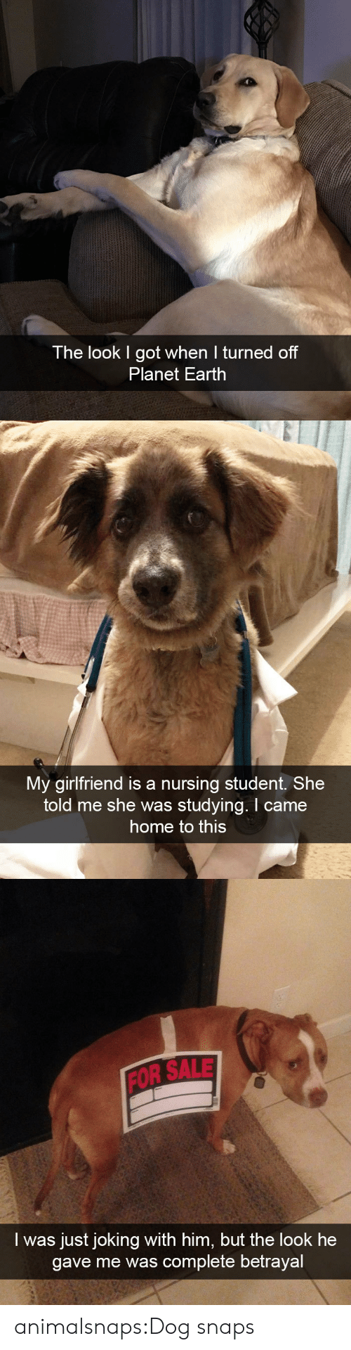 Him But: The look I got when I turned off  Planet Earth   My girlfriend is a nursing student. She  told me she was studying. I came  home to this   FOR SALE  I was just joking with him, but the look he  gave me was complete betrayal animalsnaps:Dog snaps