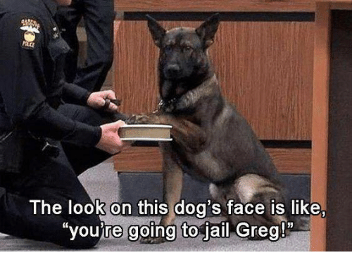 """Dog Faces: The look on this dog's face is like,  """"you're going to jail Greg!"""""""