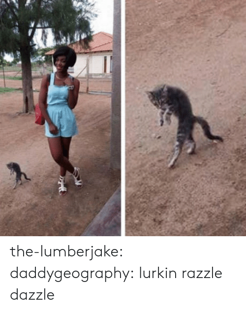 Target, Tumblr, and Blog: the-lumberjake:  daddygeography: lurkin  razzle dazzle