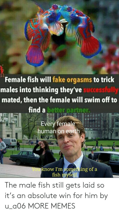 him: The male fish still gets laid so it's an absolute win for him by u_a06 MORE MEMES