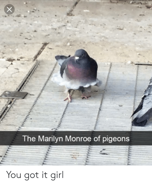 Marilyn Monroe: The Marilyn Monroe of pigeons You got it girl