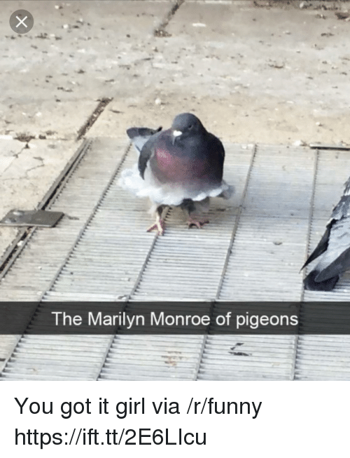 Marilyn Monroe: The Marilyn Monroe of pigeons You got it girl via /r/funny https://ift.tt/2E6LIcu