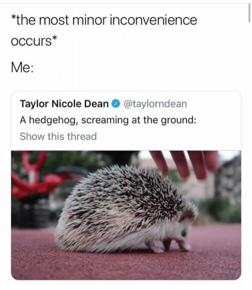 Inconvenience: *the most minor inconvenience  oCcurs*  Me:  Taylor Nicole Dean@taylorndean  A hedgehog, screaming at the ground:  Show this thread