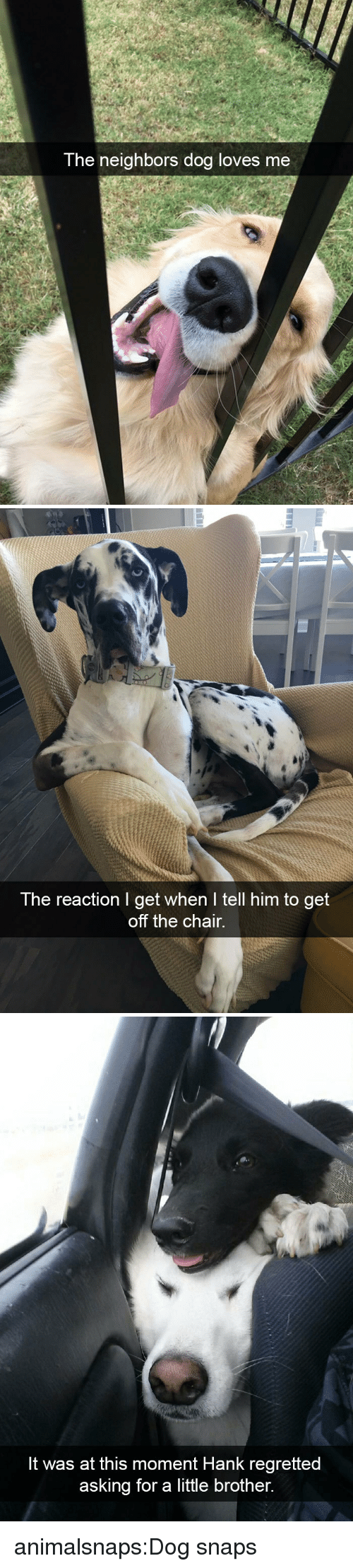 Target, Tumblr, and Blog: The neighbors doa loves me   The reaction I get when I tell him to get  off the chair.   It was at this moment Hank regretted  asking for a little brother. animalsnaps:Dog snaps