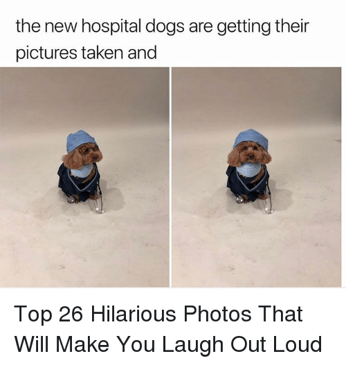 Dogs, Taken, and Hospital: the new hospital dogs are getting their  pictures taken and Top 26 Hilarious Photos That Will Make You Laugh Out Loud