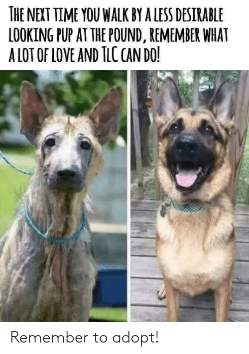 Next Time: THE NEXT TIME YOU WALK BY A LESS DESIRABLE  LOOKING PUP AT THE POUND, REMEMBER WHAT  A LOT OF LOVE AND TLC CAN DO! Remember to adopt!