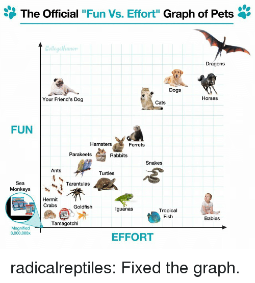 "rabbits: The Official ""Fun Vs. Effort"" Graph of Pets '  Dragons  Dogs  Your Friend's Dog  Horses  Cats  FUN  Hamsters  Ferrets  Parakeets  Rabbits  Snakes  Ants  Turtles  Sea  Monkeys  Tarantulas  Hermit  Crabs  Goldfish  lguanas  Tropical  Fish  Babies  Tamagotchi  Magnified  3,000,000x  EFFORT radicalreptiles:  Fixed the graph."