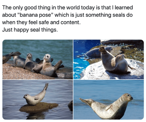 "Banana, Good, and Happy: The only good thing in the world today is that I learned  about ""banana pose"" which is just something seals do  when they feel safe and content.  Just happy seal things."