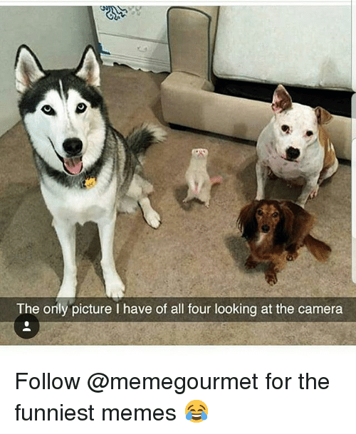 The Funniest Memes: The only picture I have of all four looking at the camera Follow @memegourmet for the funniest memes 😂