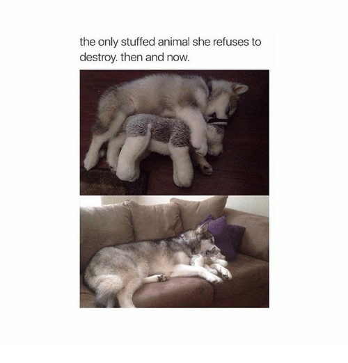 Animals, Anime, and Animal: the only stuffed animal she refuses to  destroy then and now.