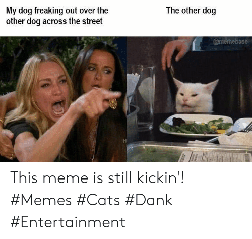 memebase: The other dog  My dog freaking out over the  other dog across the street  @memebase This meme is still kickin'! #Memes #Cats #Dank #Entertainment