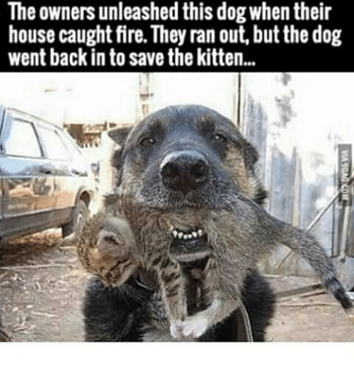 Memes, 🤖, and Dog: The owners unleashed this dog when their  house caught fire. They ran out, but the dog  went back in to save thekitten...