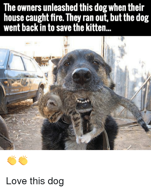 Fire, Love, and House: The owners unleashed this dog when their  house caught fire. They ran out, but the dog  went back in to save the kitten.. Love this dog