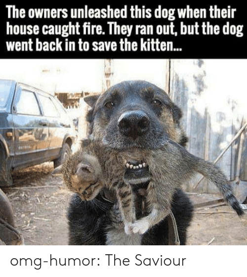 Fire, Omg, and Tumblr: The owners unleashed this dog when their  house caught fire. They ran out, but the dog  went back in to save the kitten.. omg-humor:  The Saviour