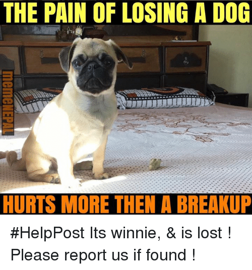 nepali: THE PAIN OF LOSING A DOG  HURTS MORE THEN A BREAKUP #HelpPost   Its winnie, & is lost ! Please report us if found !
