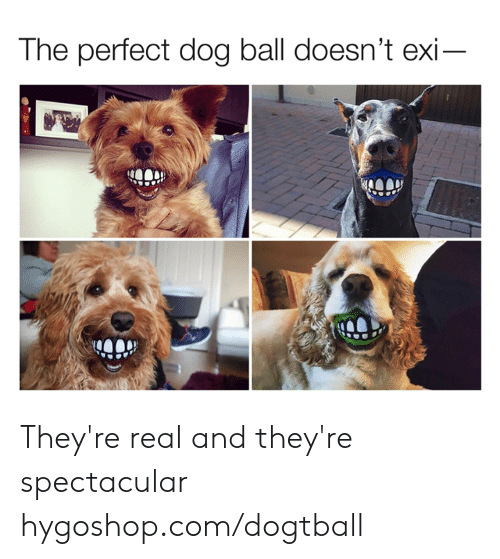 Dank, 🤖, and Dog: The perfect dog ball doesn't exi They're real and they're spectacular  hygoshop.com/dogtball