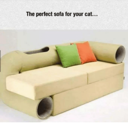 Memes, 🤖, and Cat: The perfect sofa for your cat...