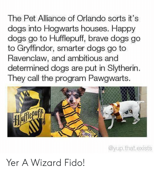 yer: The Pet Alliance of Orlando sorts it's  dogs into Hogwarts houses. Happy  dogs go to Hufflepuff, brave dogs go  to Gryffindor, smarter dogs go to  Ravenclaw, and ambitious and  determined dogs are put in Slytherin  They call the program Pawgwarts.  flefferuyy  AUУ  @yup.that.exists Yer A Wizard Fido!