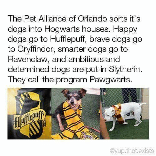 Slytherin: The Pet Alliance of Orlando sorts it's  dogs into Hogwarts houses. Happy  dogs go to Hufflepuff, brave dogs go  to Gryffindor, smarter dogs go to  Ravenclaw, and ambitious and  determined dogs are put in Slytherin  They call the program Pawgwarts.  flefferuyy  @yup.that.exists