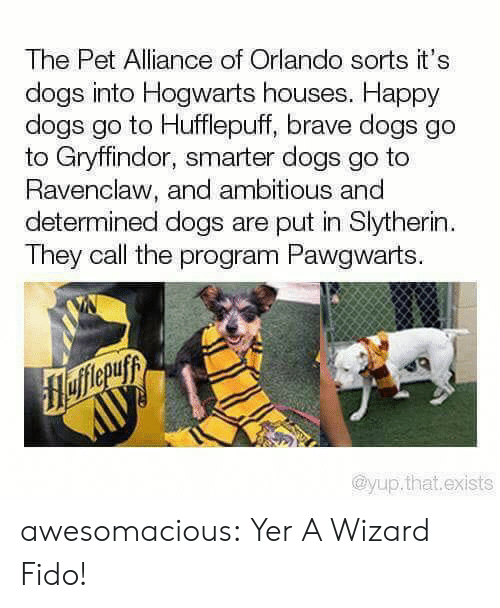 yer: The Pet Alliance of Orlando sorts it's  dogs into Hogwarts houses. Happy  dogs go to Hufflepuff, brave dogs go  to Gryffindor, smarter dogs go to  Ravenclaw, and ambitious and  determined dogs are put in Slytherin  They call the program Pawgwarts.  flefferuyy  AUУ  @yup.that.exists awesomacious:  Yer A Wizard Fido!
