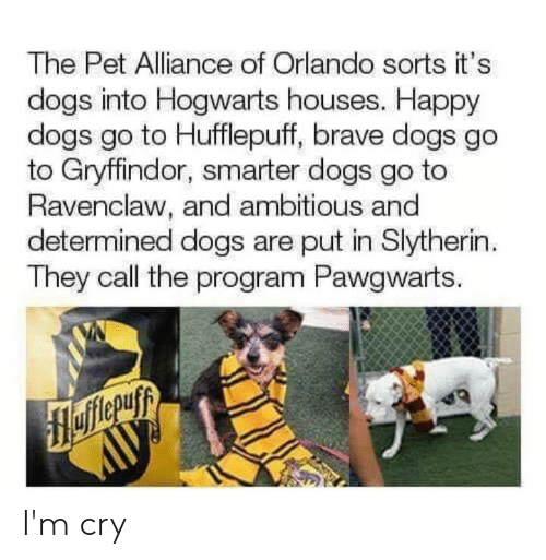 Slytherin: The Pet Alliance of Orlando sorts it's  dogs into Hogwarts houses. Happy  dogs go to Hufflepuff, brave dogs go  to Gryffindor, smarter dogs go to  Ravenclaw, and ambitious and  determined dogs are put in Slytherin  They call the program Pawgwarts. I'm cry