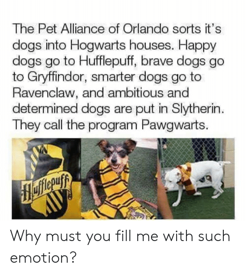 Slytherin: The Pet Alliance of Orlando sorts it's  dogs into Hogwarts houses. Happy  dogs go to Hufflepuff, brave dogs go  to Gryffindor, smarter dogs go to  Ravenclaw, and ambitious and  determined dogs are put in Slytherin  They call the program Pawgwarts. Why must you fill me with such emotion?