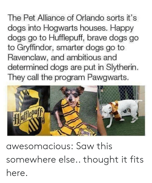 Slytherin: The Pet Alliance of Orlando sorts it's  dogs into Hogwarts houses. Happy  dogs go to Hufflepuff, brave dogs go  to Gryffindor, smarter dogs go to  Ravenclaw, and ambitious and  determined dogs are put in Slytherin  They call the program Pawgwarts. awesomacious:  Saw this somewhere else.. thought it fits here.