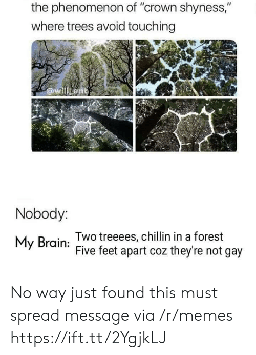 """Phenomenon: the phenomenon of """"crown shyness,""""  where trees avoid touching  @willent  Nobody:  Two treeees, chillin in a forest  Five feet apart coz they're not gay  My Brain No way just found this must spread message via /r/memes https://ift.tt/2YgjkLJ"""
