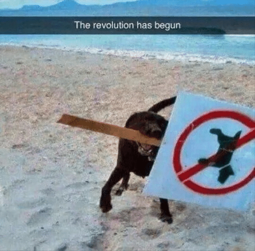 Revolution, The, and Has: The revolution has begun