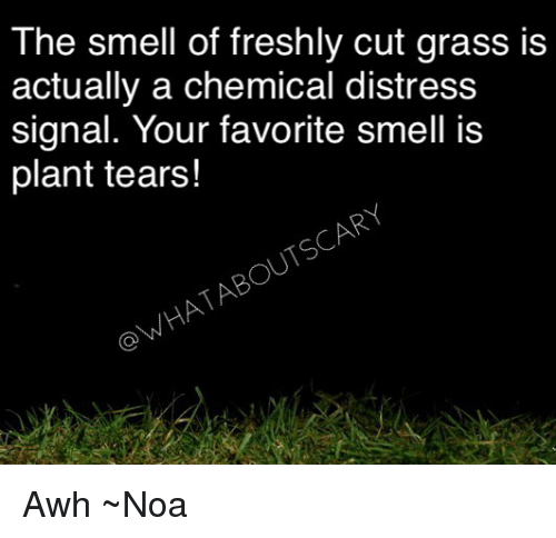 Grasse: The smell of freshly cut grass is  actually a chemical distress  signal. Your favorite smell is  plant tears!  OWHATABOUTSCARY Awh ~Noa
