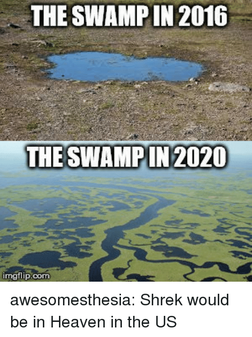 Heaven, Shrek, and Tumblr: THE SWAMPIN 2016  THE SWAMPIN 2020  imgflip.com awesomesthesia:  Shrek would be in Heaven in the US