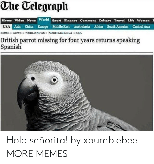 Africa, America, and Dank: The Telegraph  Home Video News World Sport Pinanee Comment Culture Travel Life Women  USA  Asia China Europe Middle East Australasia Africa South America Central Asia  HOME NEWS WORLD NEWS NORTH AMERICA USA  British parrot missing for four years returns speaking  Spanish Hola señorita! by xbumblebee MORE MEMES