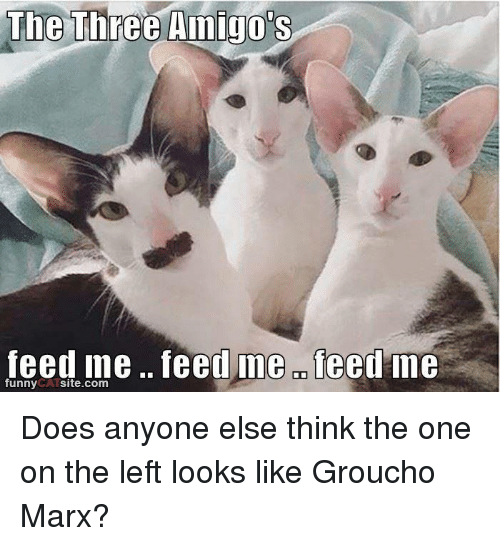 three amigos: The Three Amigo's  feed me feed ine OD  feed me  funny  site.com Does anyone else think the one on the left looks like Groucho Marx?