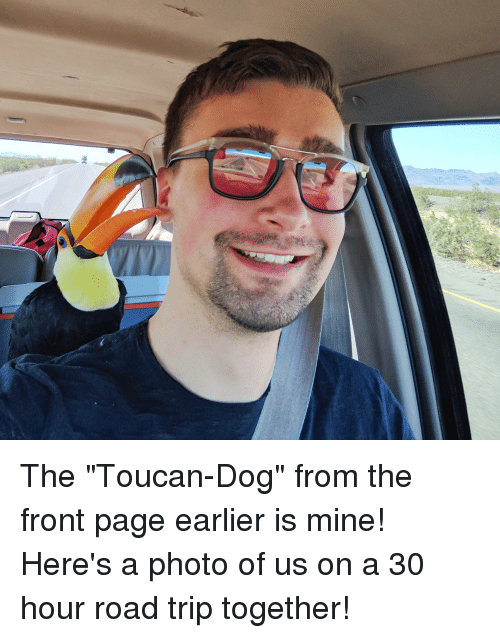 """Page, Dog, and Mine: The """"Toucan-Dog"""" from the front page earlier is mine! Here's a photo of us on a 30 hour road trip together!"""