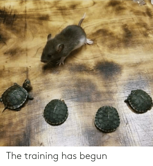 training: The training has begun