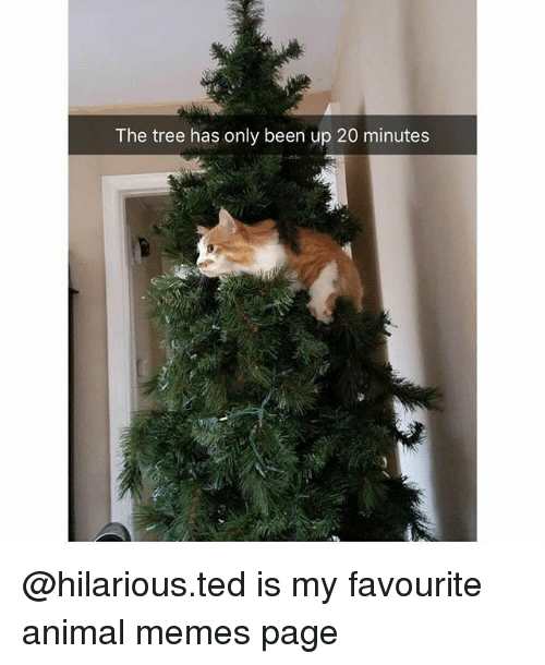 Memes Page: The tree has only been up 20 minutes @hilarious.ted is my favourite animal memes page