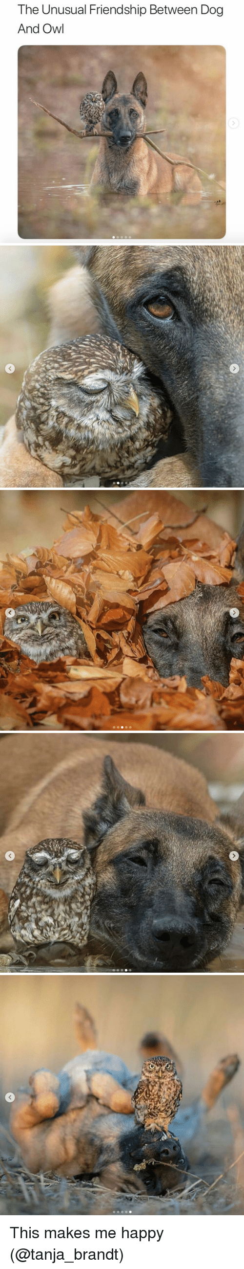 Instagram, Target, and Happy: The Unusual Friendship Between Dog  And Owl This makes me happy (@tanja_brandt)