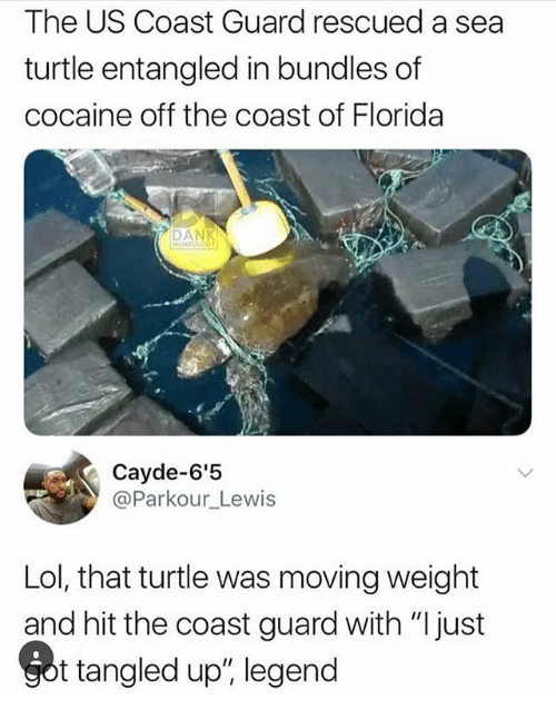 """Lol, Memes, and Cocaine: The US Coast Guard rescued a sea  turtle entangled in bundles of  cocaine off the coast of Florida  Cayde-6'5  @Parkour_Lewis  Lol, that turtle was moving weight  and hit the coast guard with """"I just  t tangled up"""", legend"""